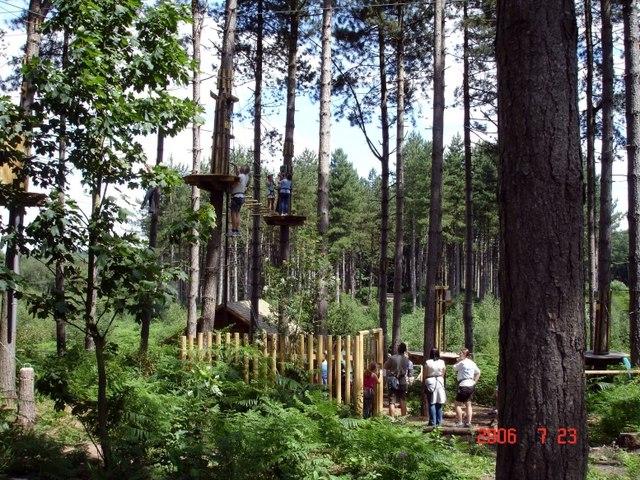 "Delamere, ""Go Ape"" in Delamere Forest"