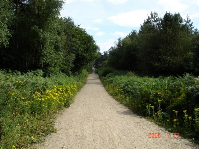 Manley - track in Delamere Forest