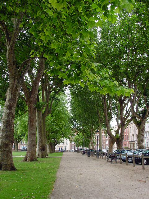 Avenue of Trees in Queen Square