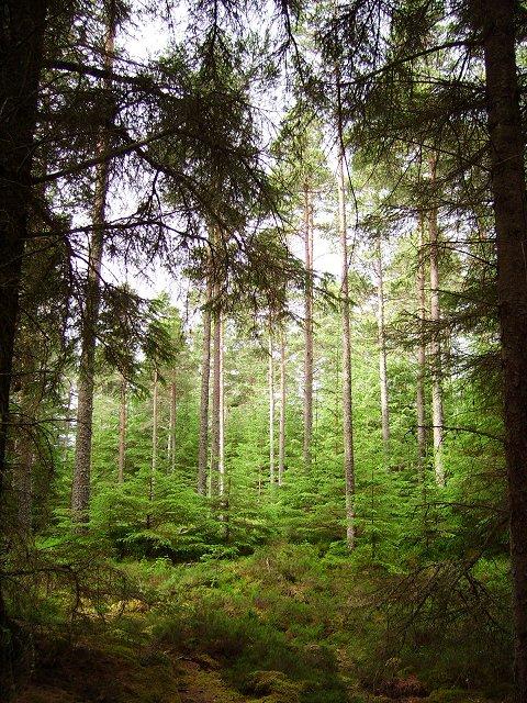 Forest, Glen Glass