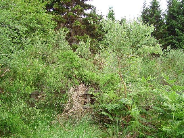 Overgrown gateway