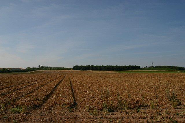 Field at Worlington