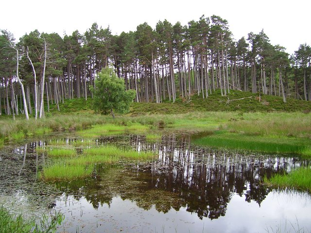 Pool and forest marsh