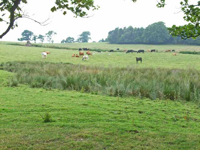 Pasture at Boothby, near Lanercost