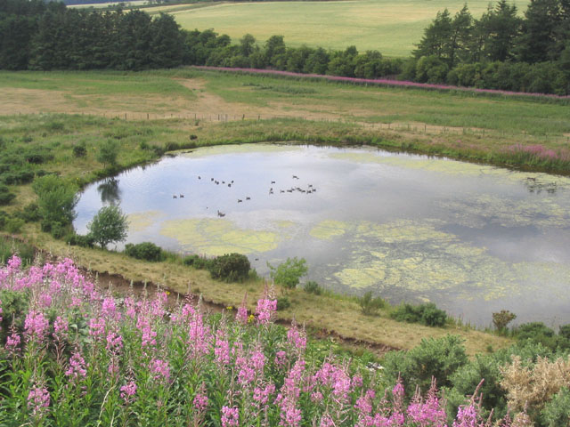 Pond by the Cleekhimin Burn