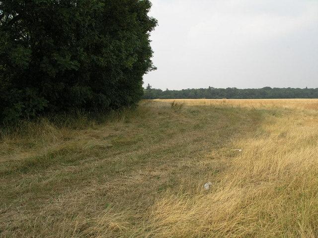 Flat Grass