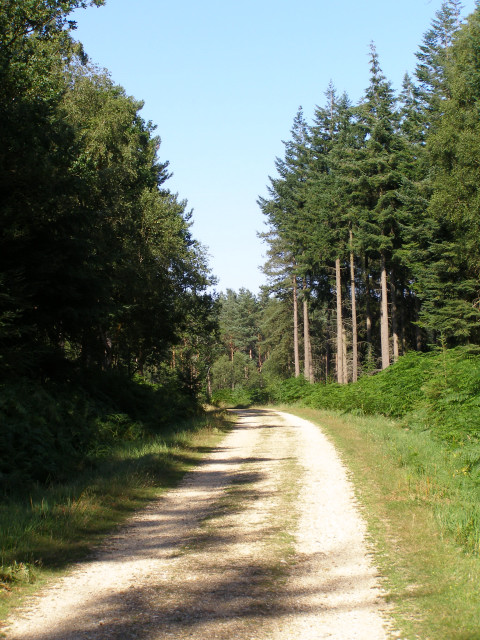 Off-road cycle path in the Parkhill Inclosure, New Forest