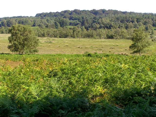 View across the Bishop of Winchester's Purlieu towards Woodfidley, New Forest
