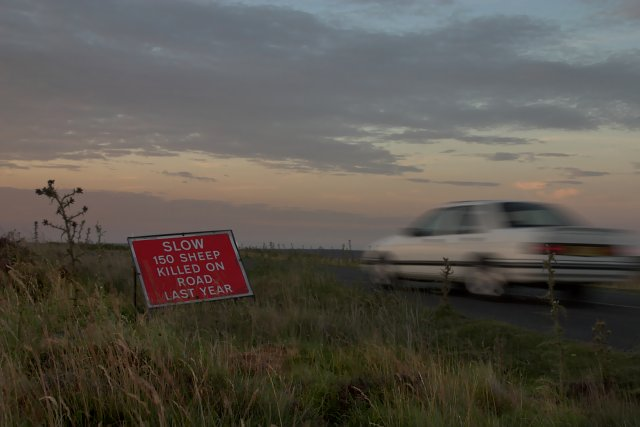 Sheep Deaths on Moorland roads