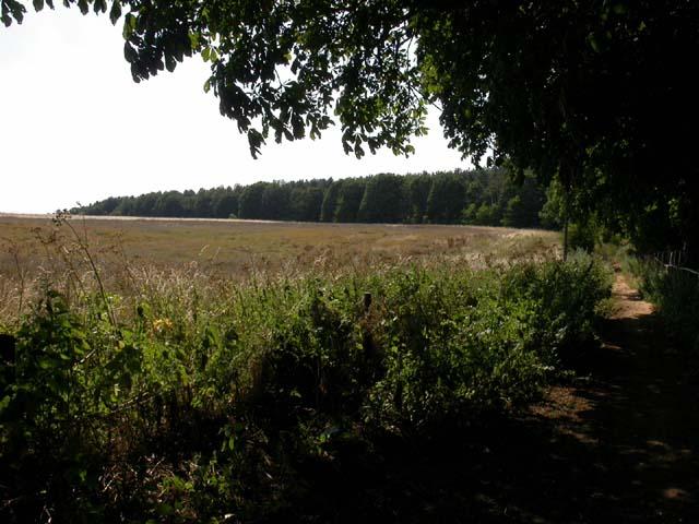 View to Dallington Heath