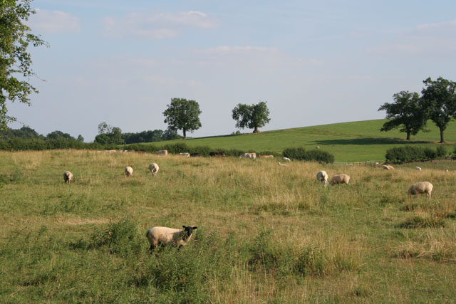 Farmland off Loddington Road