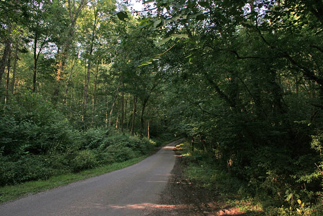 Wood Lane in Tugby Wood