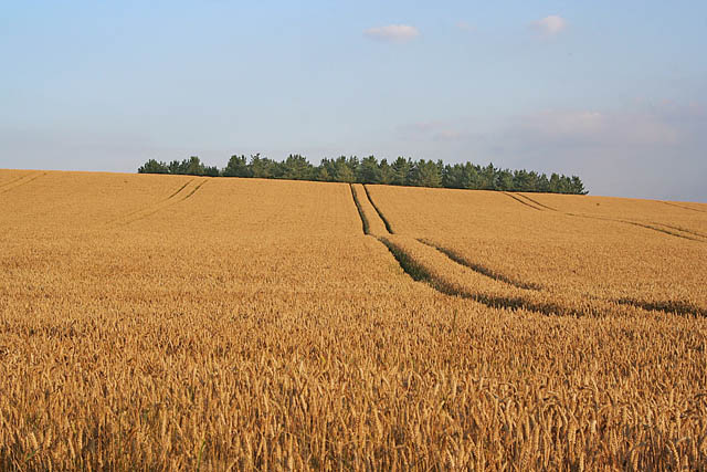 Farmland near Loddington