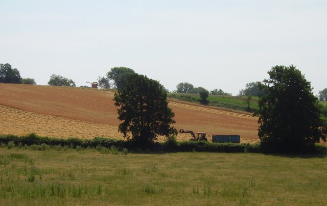 Harvesting, Snitton