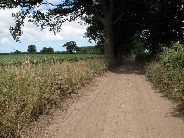 Unsurfaced track near Fring Wood Farm