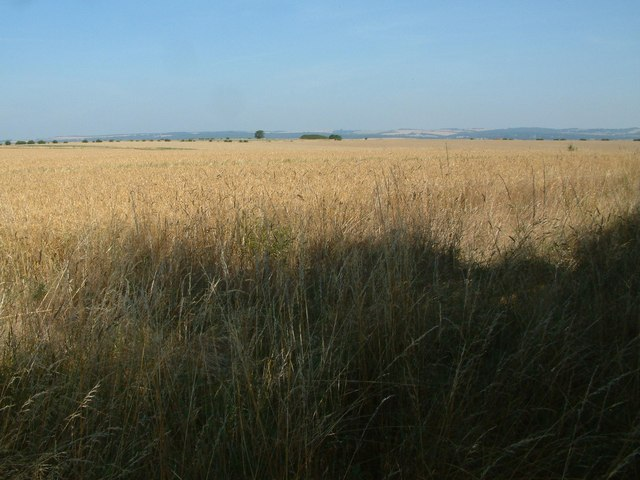 View towards Gussage Hill