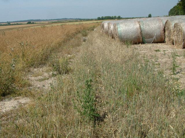 Farmland, west of Cranborne