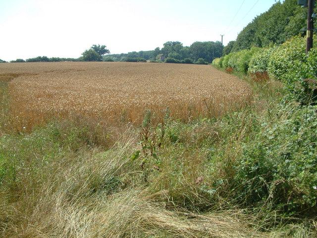 Farmland south of Cranborne