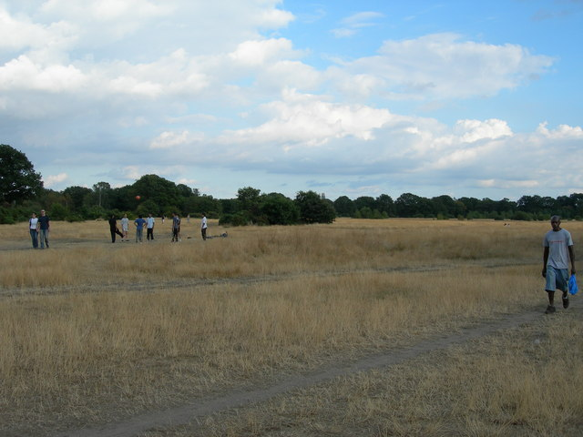 Epping Forest (1)