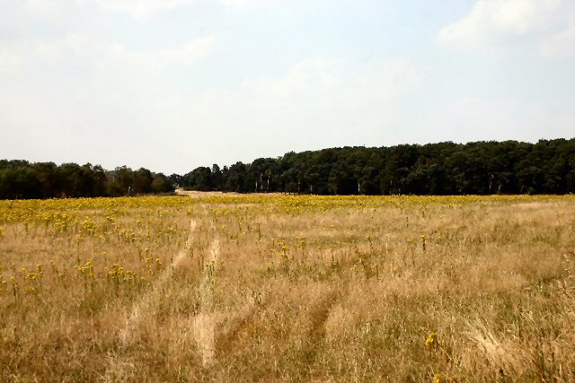 Uncultivated field near Mildenhall