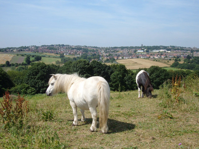Ponies at Beulah Farm