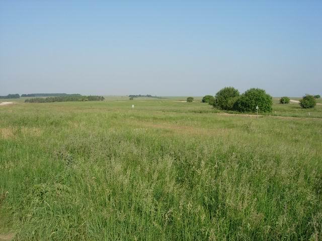 Salisbury Plain grassland