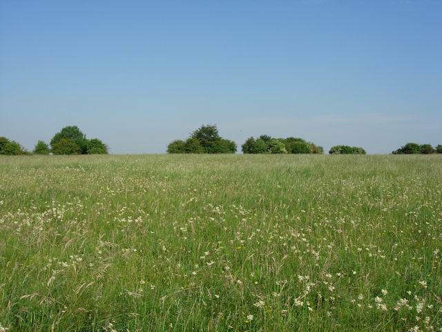 Flower rich grassland