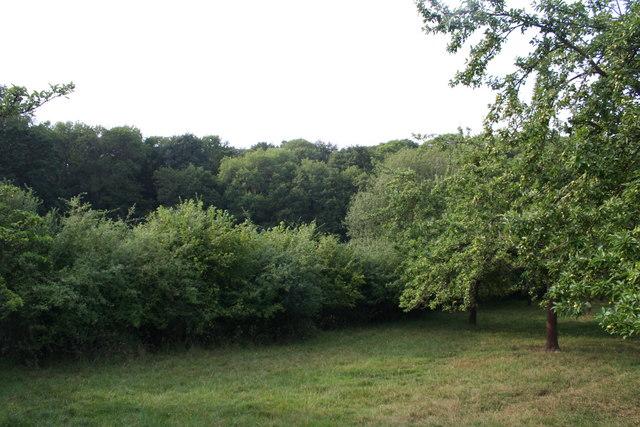 Lower Bolstone Wood