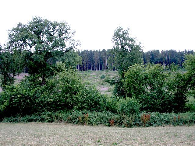 Nether Wood