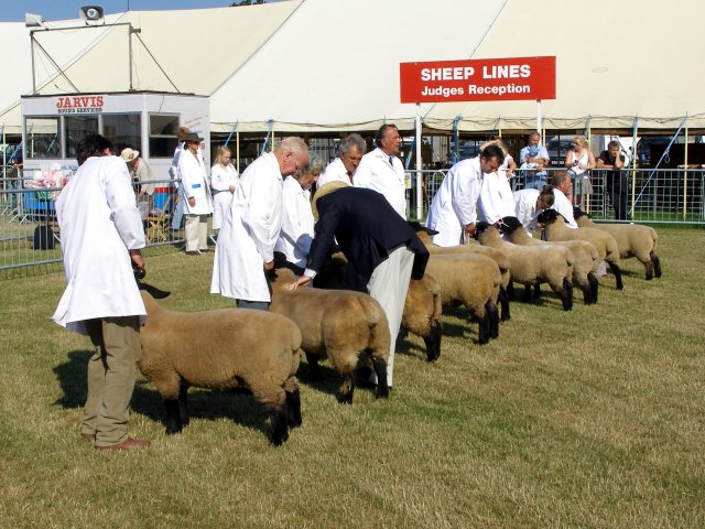 Sheep judging in progress at the New Forest Show
