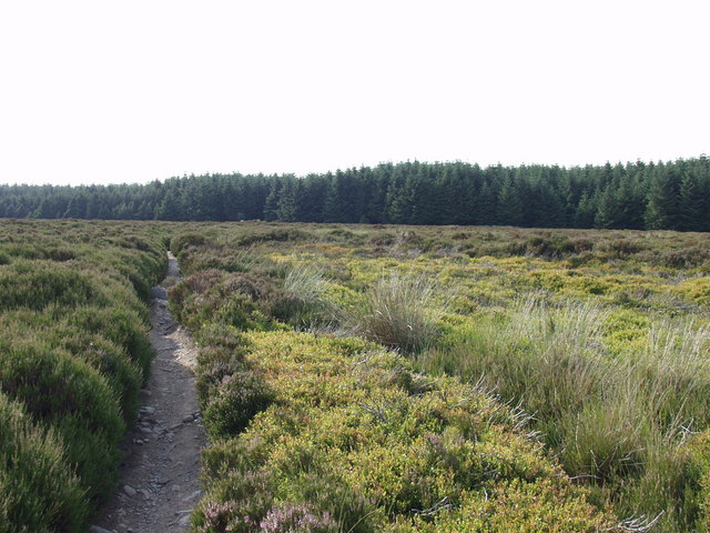 Offa's Dyke Path approaches Llandegla Forest