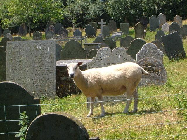 Blackawton churchyard