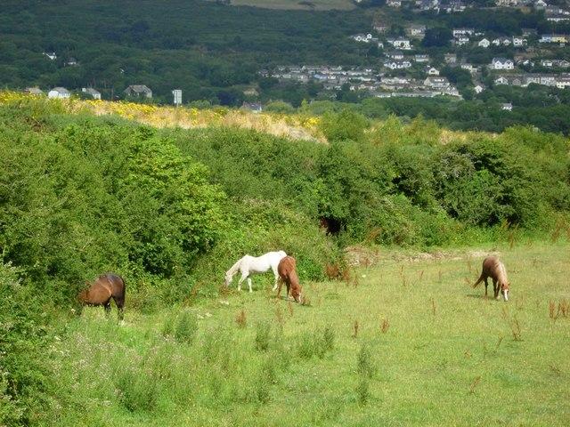 Horses near Fishguard