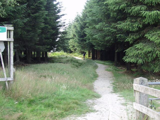 Offa's Dyke Path in Llandegla Forest