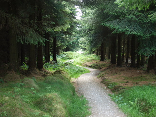 Offa's Dyke Path deep in the Llandegla Forest