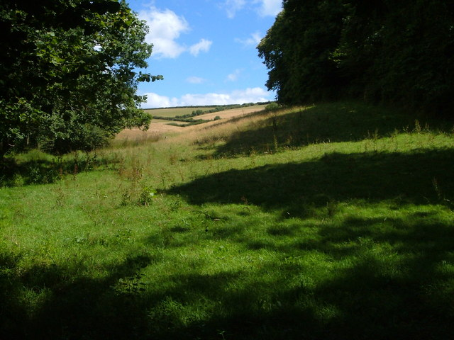 Field beside Coleshill Copse