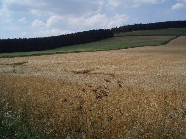 Borders Wheat Field.