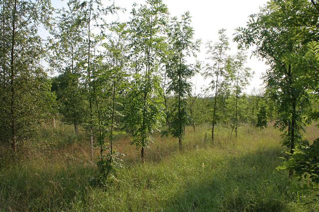 Londonthorpe Wood