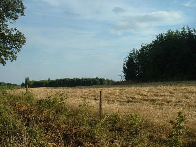 Woodland near Hawarden