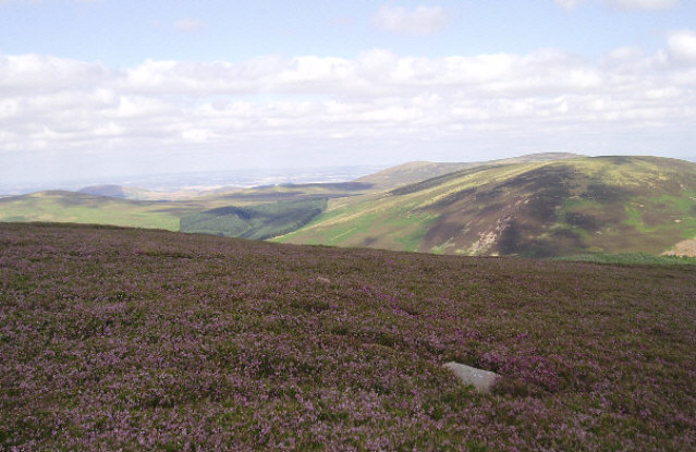 Heather moorland in the Cheviot Hills