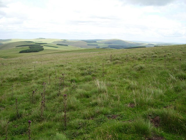 Northeastern slopes of Nether Birchy Law