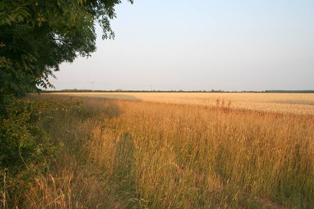Farmland off Green Lane