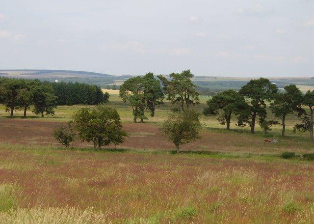 Wetland meadows