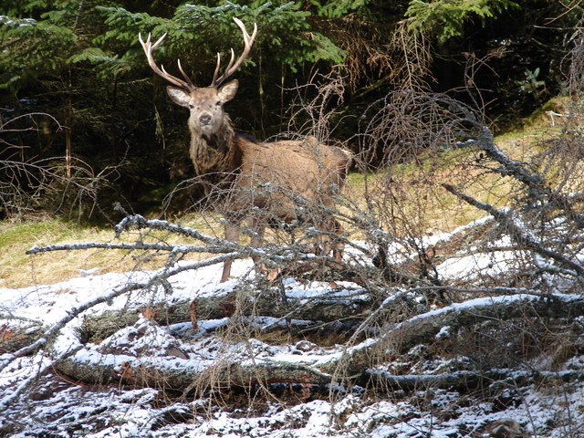 Stag at Ben Alder Lodge