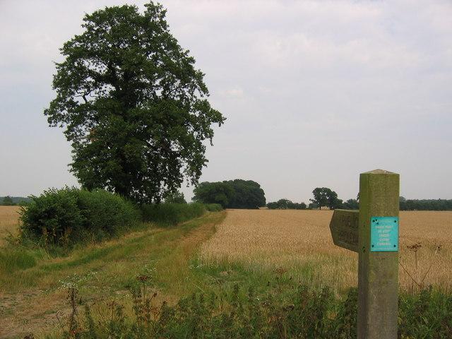 Bridleway at SE996455