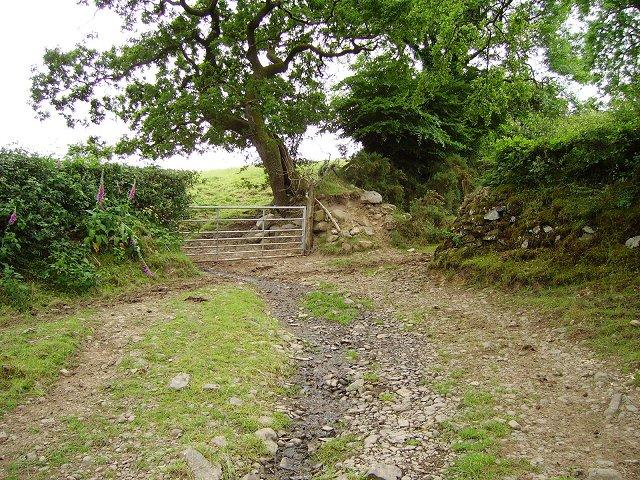 Old lane, Brigwellt-y-coed