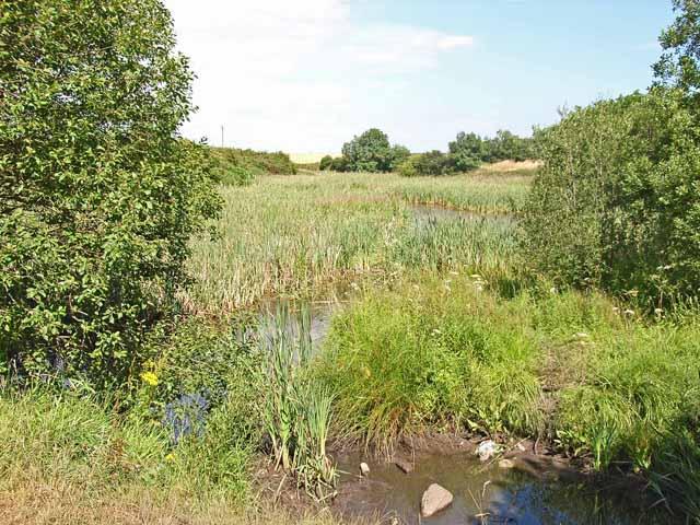 Pond near Benridge, High Hesleden