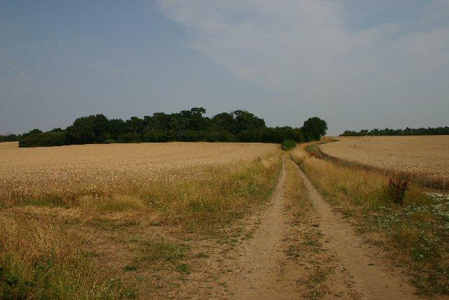 Track off Walsham Road