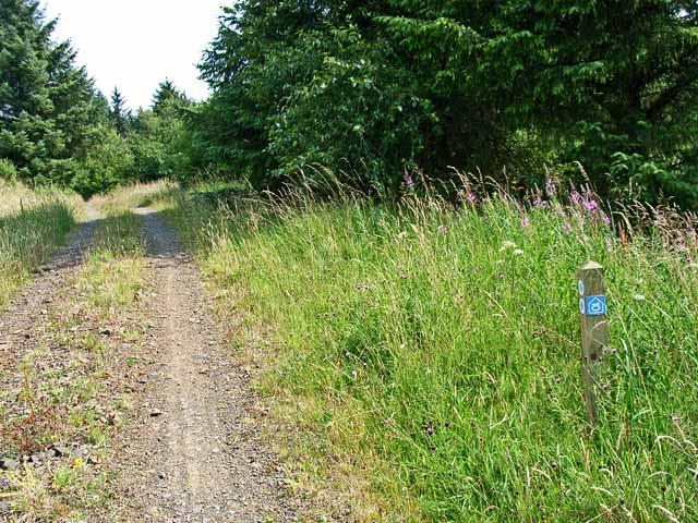 Forest road near Scotch Kershope