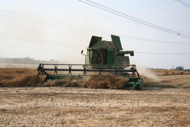 Laneham harvest